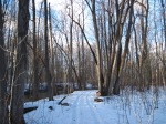 Coldstream Conservation Area trail