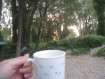 Long Point sunrise coffee